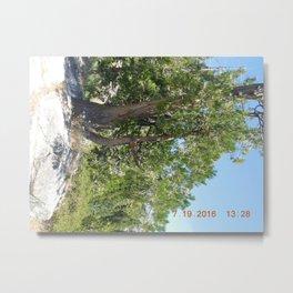 road trip, tree, non typical Metal Print