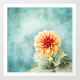 Aqua Orange Dahlia Flower Photography, Turquoise Teal Peach Nature Art Art Print
