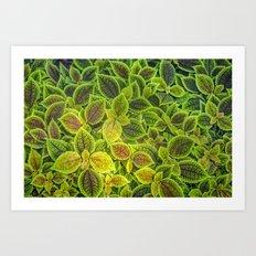 Friendship plant Art Print