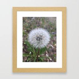 Pusteblume Framed Art Print