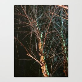 Blessed Is The Birch Canvas Print