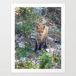 fox 2018-8 Art Print