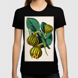 Fig plant, vintage illustration T-shirt