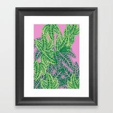 Zebra Plant  Framed Art Print