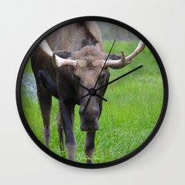 Bullwinkle Bull Wall Clock