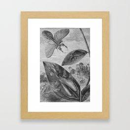 Vintage Insect Illustration Flying Leaf or Katydid Framed Art Print