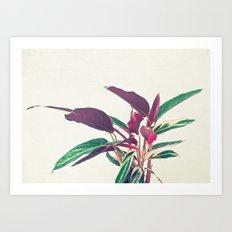 Prayer Plant II Art Print