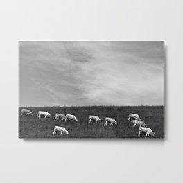 FRANCE LANDSCAPE COWS PYRENEES Metal Print