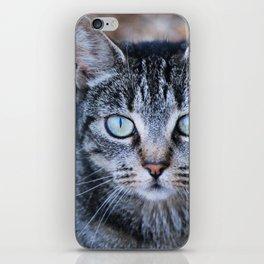Tabby Cat  iPhone Skin