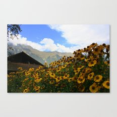 Daisies and Alps Canvas Print