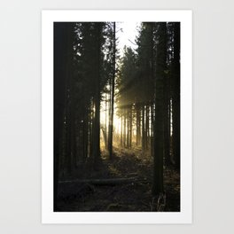 Sunbeams Through the Forest Art Print