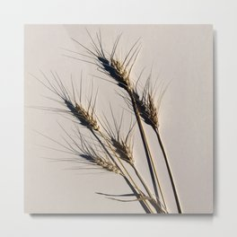 prairie wheat Metal Print