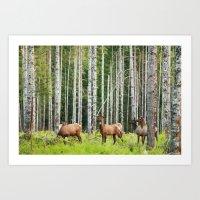 elk Art Prints featuring Elk by Andrea Gingerich