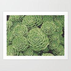Succulents   Garden Plants Art Print