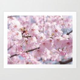 sakura on sakura Art Print