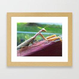 Bug picture Framed Art Print