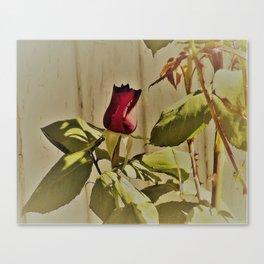 A Summer's Rose Canvas Print