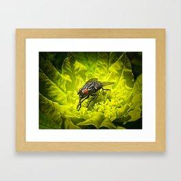 Macro Shot of a Summer Fly Sunbathing on a Yellow Perennial Garden Plant Framed Art Print