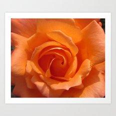 AN ORANGE ... ROSE Art Print