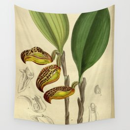 Cryptophoranthus dayanus (= Zootrophion dayanum), Orchidaceae Wall Tapestry