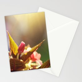 Summer Light II Stationery Cards