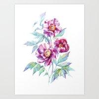 Pink peonies, botanical watercolor illustration. Art Print