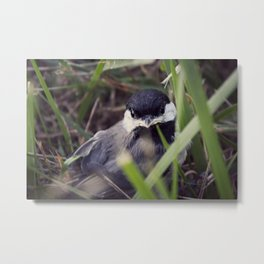 Baby Bird Metal Print