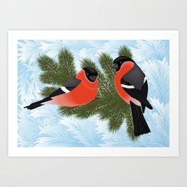 Bullfinch birds on fir tree branches Art Print
