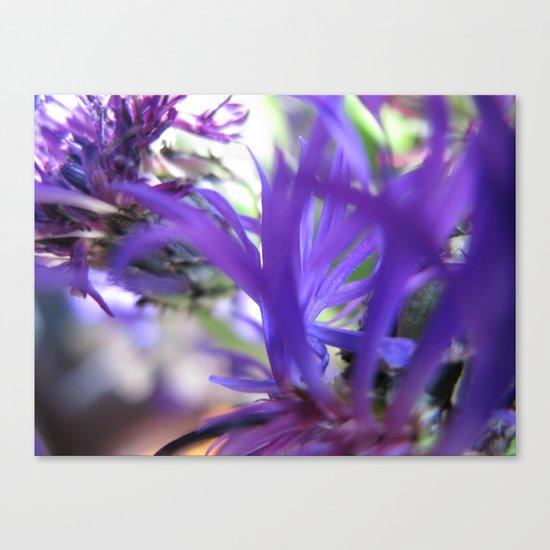 Purple Petals 75 Canvas Print