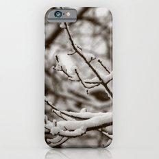 Wintry Spring iPhone 6s Slim Case