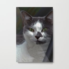 A Domestic Cat Metal Print