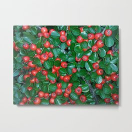 Lingonberries and leaves pattern Metal Print