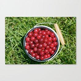 Sour cherrys fruit Canvas Print