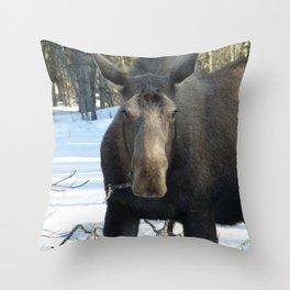 Moose Munching Poplar Lunch Throw Pillow