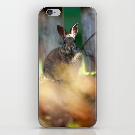Backyard Friend iPhone & iPod Skin