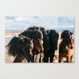 Horses in Iceland - Wildlife animals Canvas Print