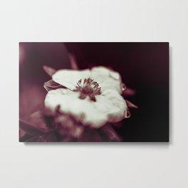 tearful flower Metal Print