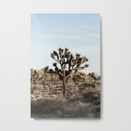 Joshua Tree National Park at Sunset Metal Print