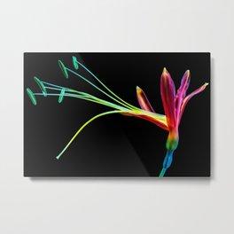 Flower bloom colorful Metal Print