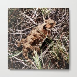 Greater Short Horned Lizard Metal Print
