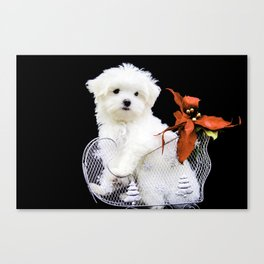 Lancelot the Maltese Puppy in Silver Sled with Red Christmas Poinsettia Canvas Print