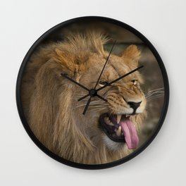 Young Lion Showing His Teeth Wall Clock