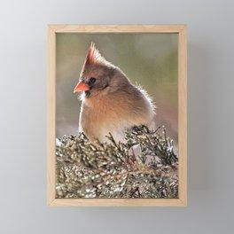 Luminous Cardinal Framed Mini Art Print