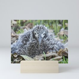 Laysan Albatross Chick, No. 1 Mini Art Print