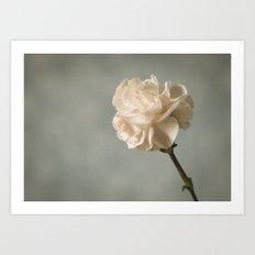 White carnation Art Print