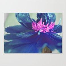 The blue peony Canvas Print