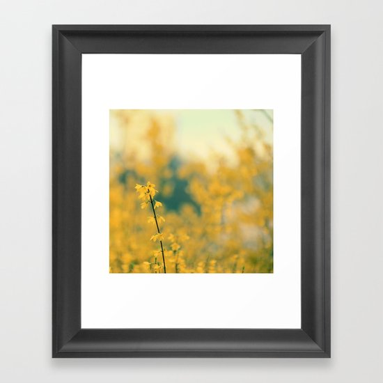 Forsythia Framed Art Print