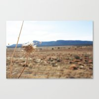 arizona Canvas Prints featuring Arizona by Kakel-photography