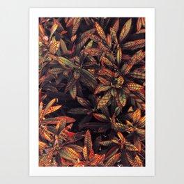 leaves evolved 5 Art Print