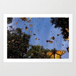 Monarchs butterflies fly Art Print
